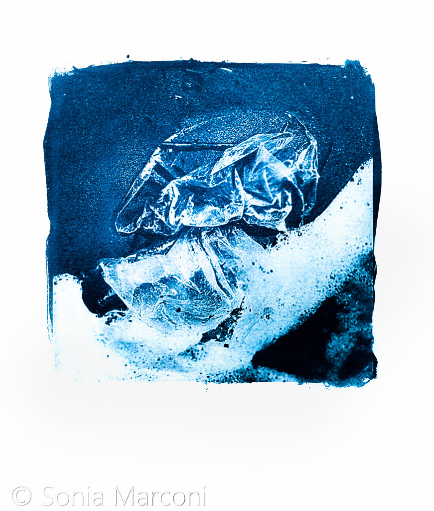 plage-cyano-3.jpg