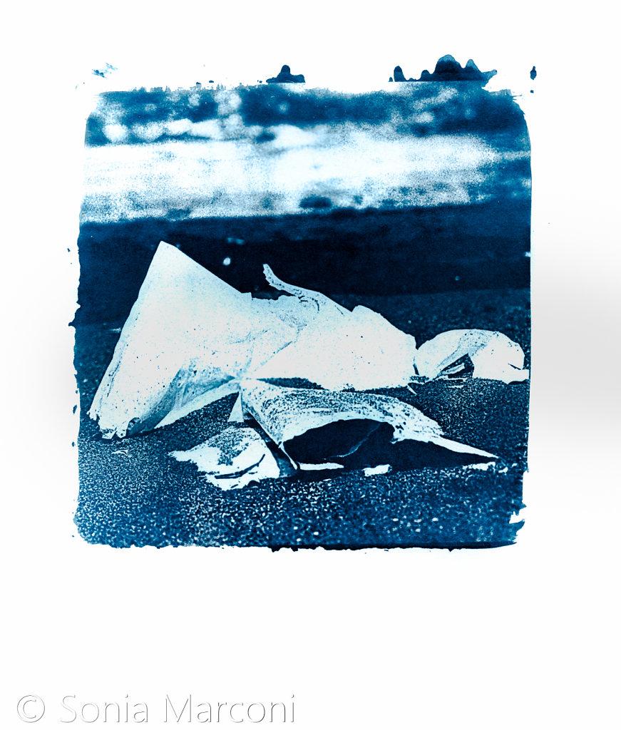 plage-cyano-4.jpg