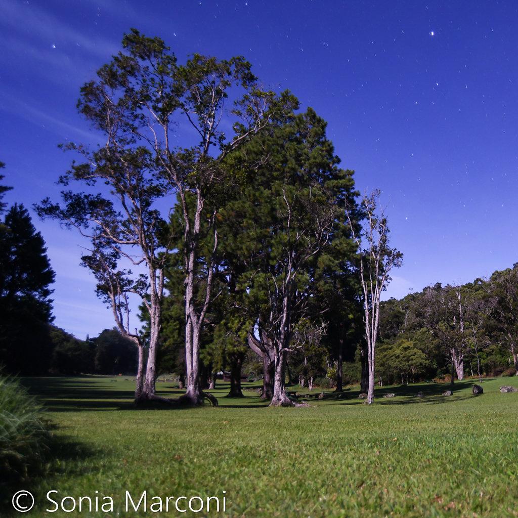 trees-6.jpg